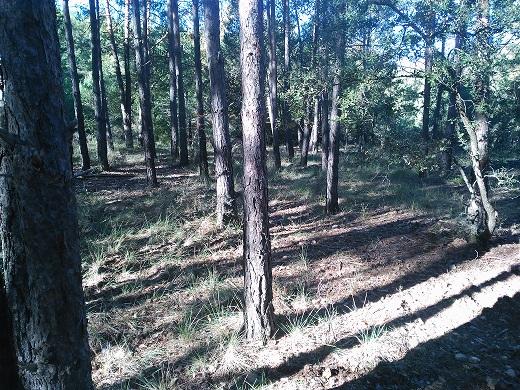 Empresa limpieza bosque Prades