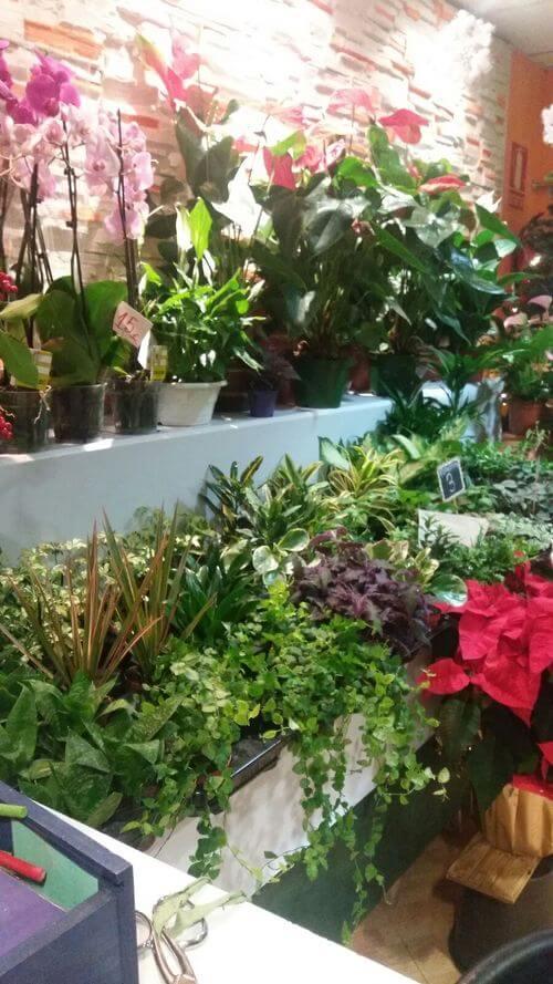 Plantas Para Regalar Reus