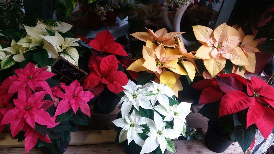 Nuestras plantas Flors per tu Reus
