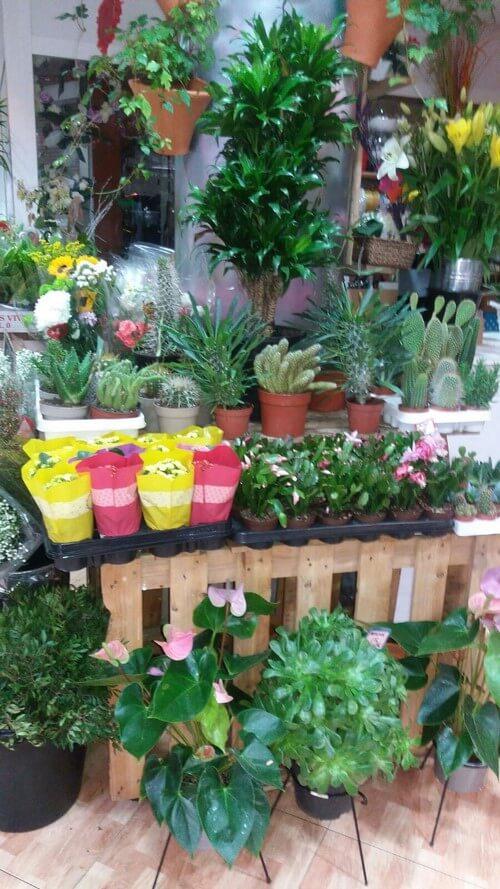 Regalo de Plantas